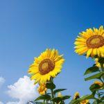 夏休み自由研究ペーパークロマトやり方と原理や考察の書き方
