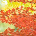 香嵐渓周辺の紅葉見所スポット10選!ドライブもおススメ