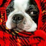犬の寒さ対策家の中ケージに何をする?留守中や夜も使える防寒グッズ紹介