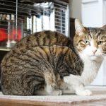 猫の寒さ対策ケージの中を暖めて留守中も安心!夜の快適環境は?