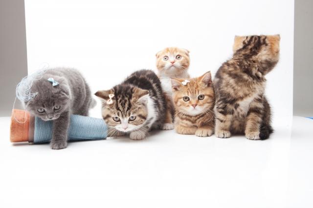 期間 妊娠 猫 の
