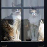 猫を完全室内飼いするのはかわいそう?メリットや飼い始めの注意点