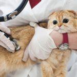 猫の風邪?鼻水やくしゃみがヒドイ時の対処法と食欲ない時の栄養補給仕方